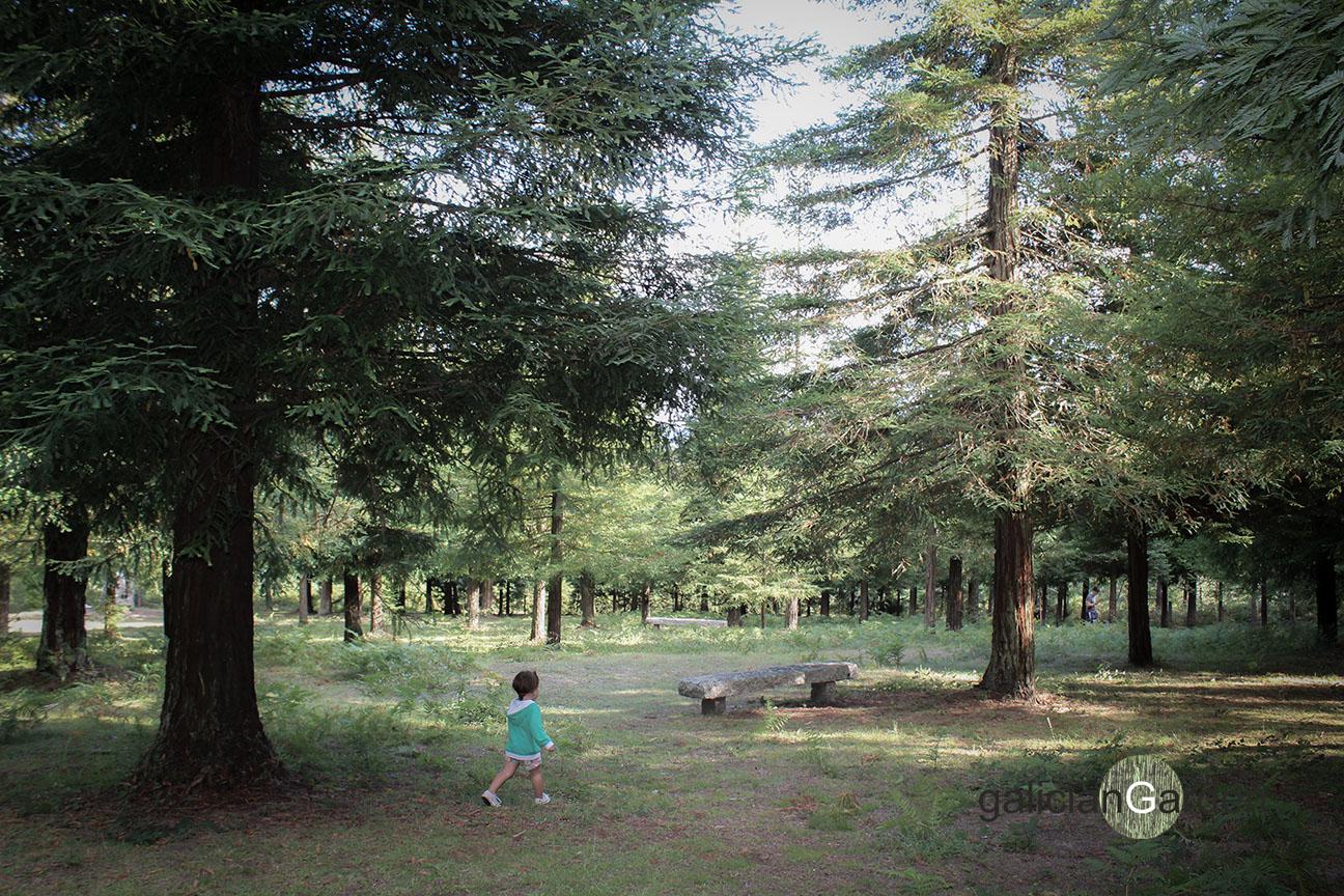 Bosque de Colón. El mayor bosque de secuoyas californianas de Europa ...