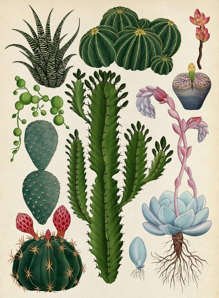 botanicum_2