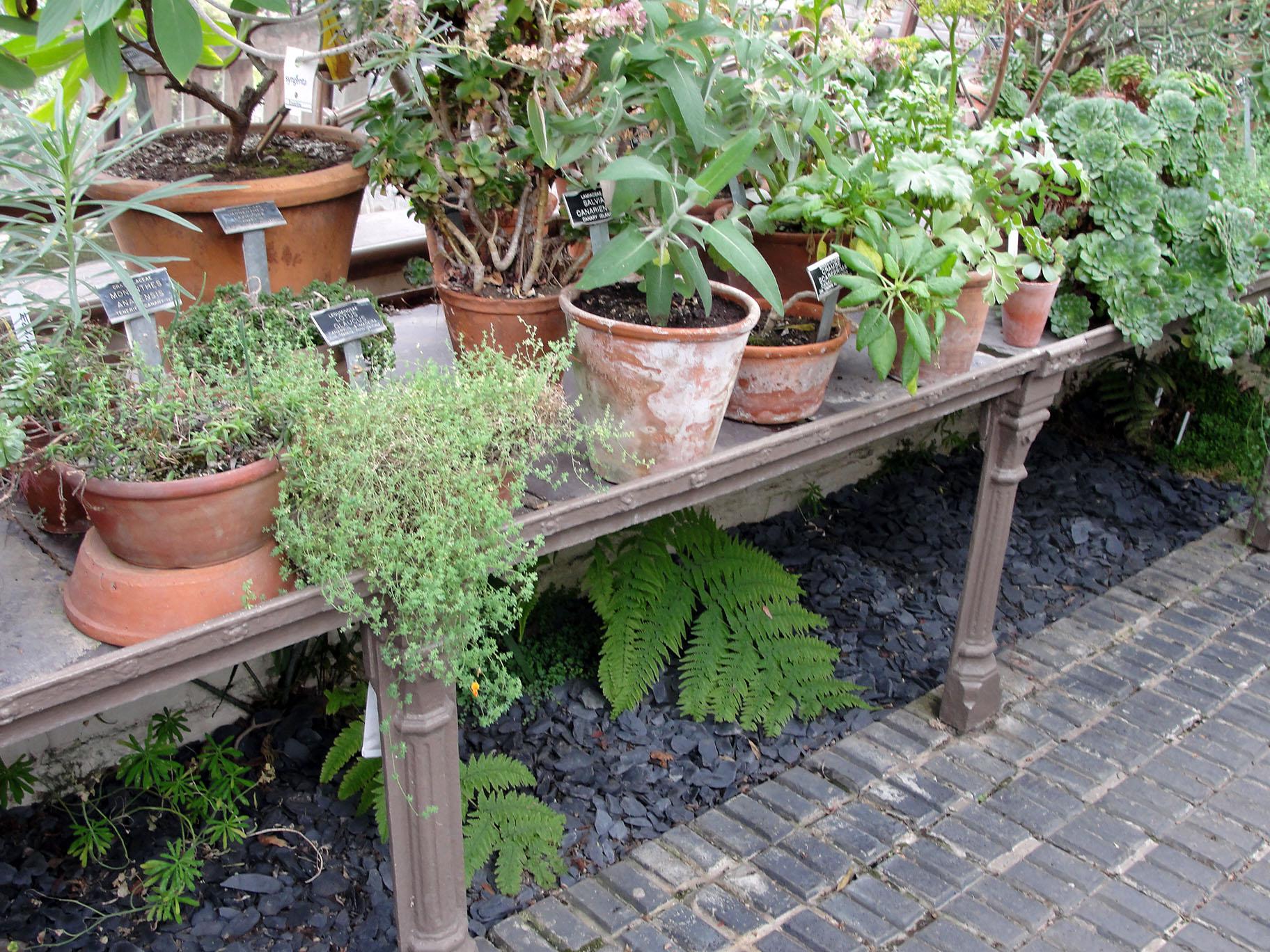 Curso de eco jardiner a galiciangarden for Aprender jardineria