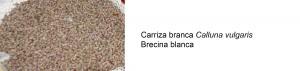 brecina