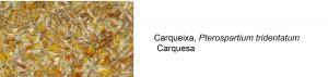 carqueixa1
