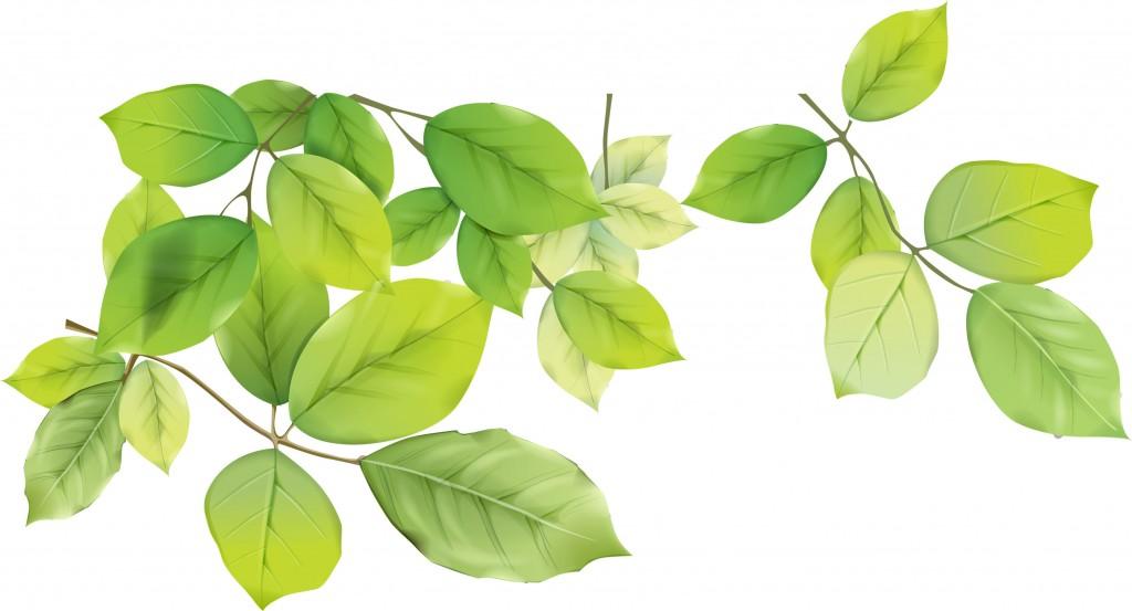 hojas-verdes1
