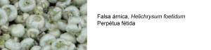 prueba_arnica