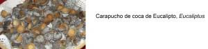 prueba_carap_euca