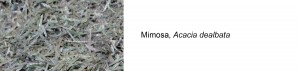 prueba_mimosa_entera