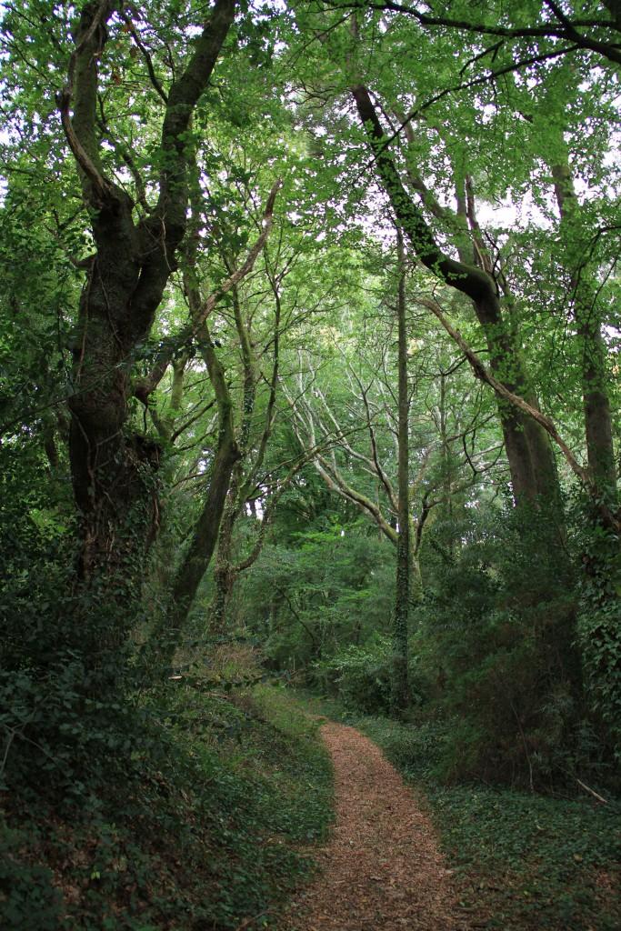 E_pazo_trasouto_bosque