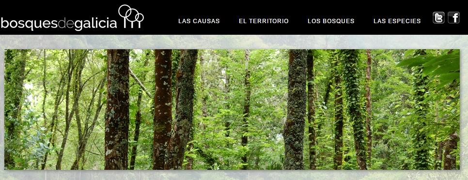 bosques_galicia_web