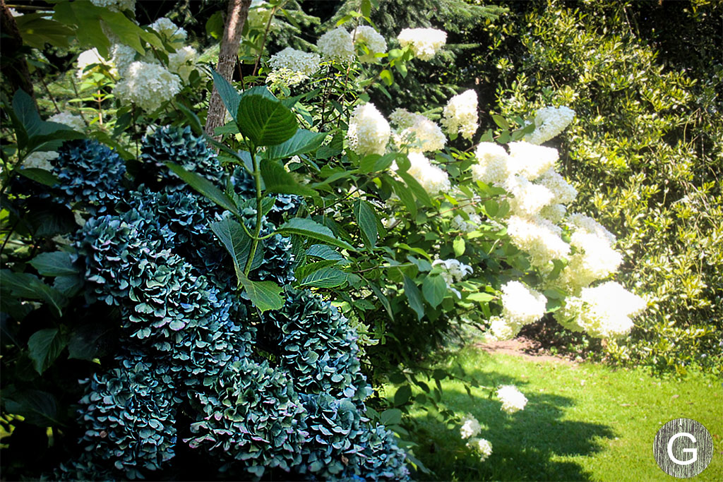 galiciangarden-caritel-1