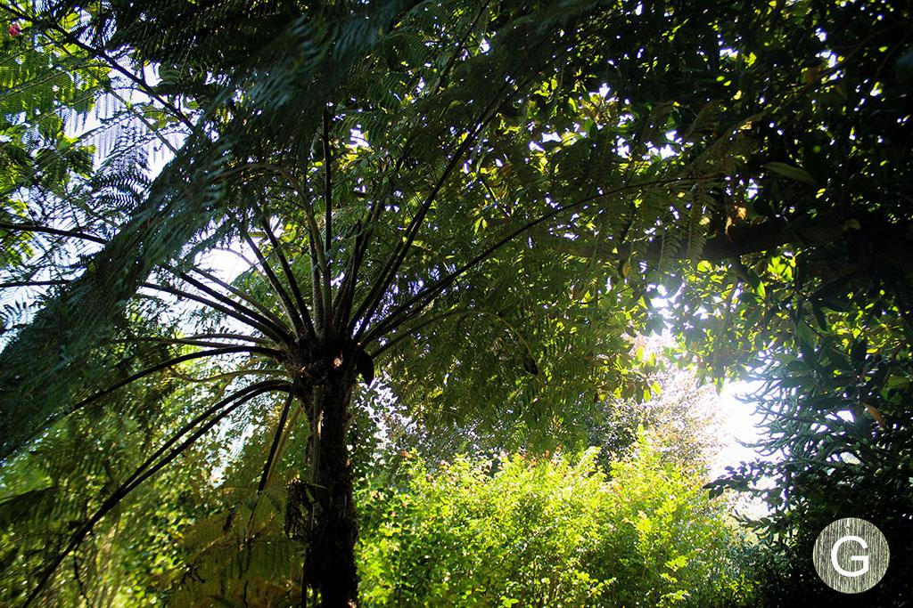 galiciangarden-caritel-IMG_7604